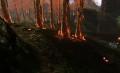 炎の木の林